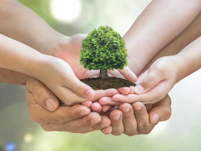 家族の手に植樹